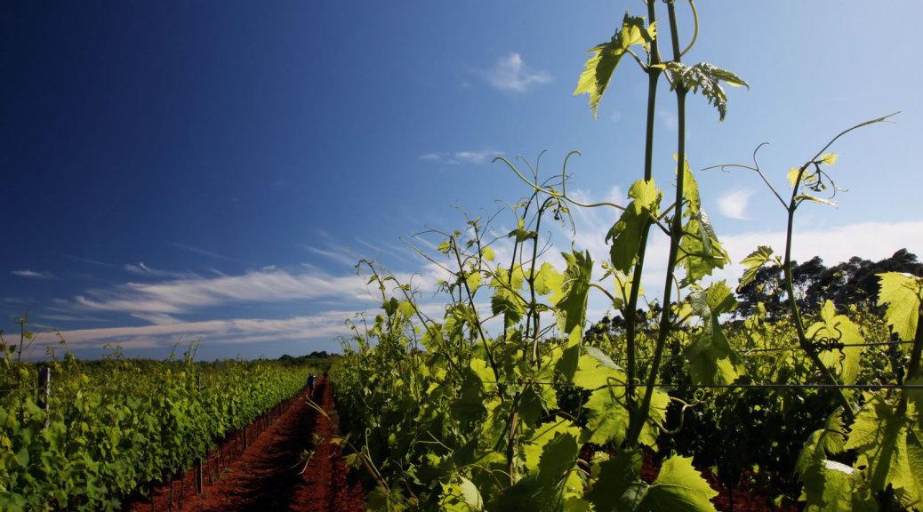 Croatian Wine Regions