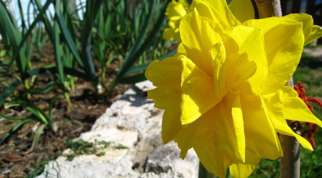 Pollen Calendar