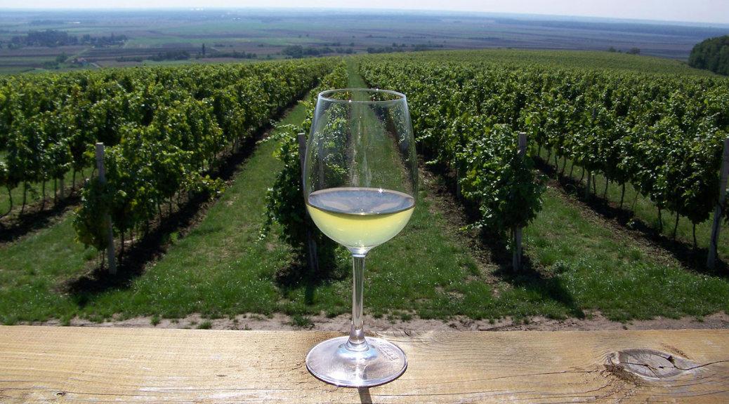 Wine in Slavonia
